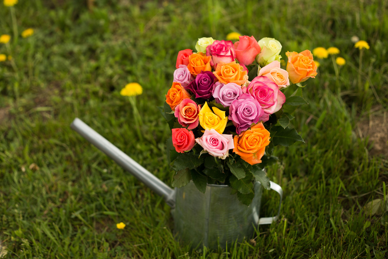 Кострома высоковский купить цветы цветок доставка цветов екатеринбург